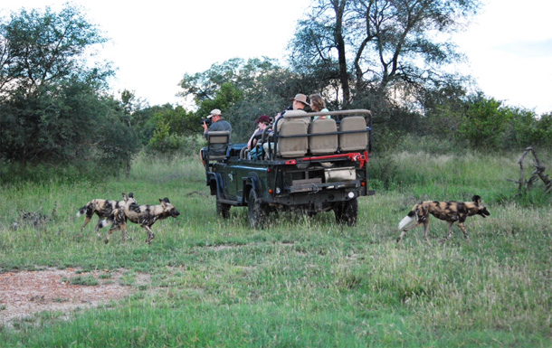 Wild dogs and game vehicles