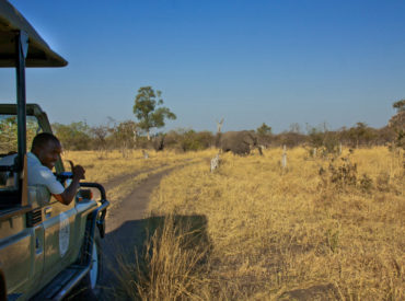 This is elephant territory like no other. It is well known that you travel to Chobe National Park to experience elephants in their masses and it is here in the heart of the Savuti that these giant mammals congregate and frolic in the newly replenished channel and surrounding swamps. Game drives at Camp Savuti often […]