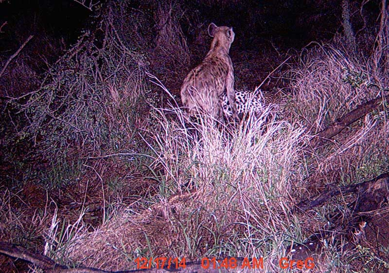 [Image: hyena-cameratrap.jpg]