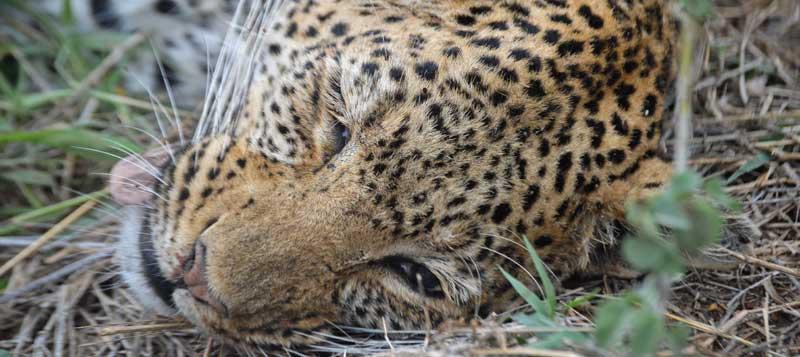 [Image: leopard-feature.jpg]