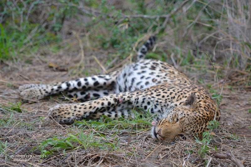 [Image: leopard-low-2.jpg]