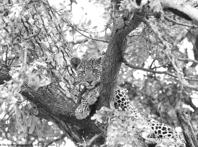 Week in Pictures: Hyenas in the mud, and a leopard cub!