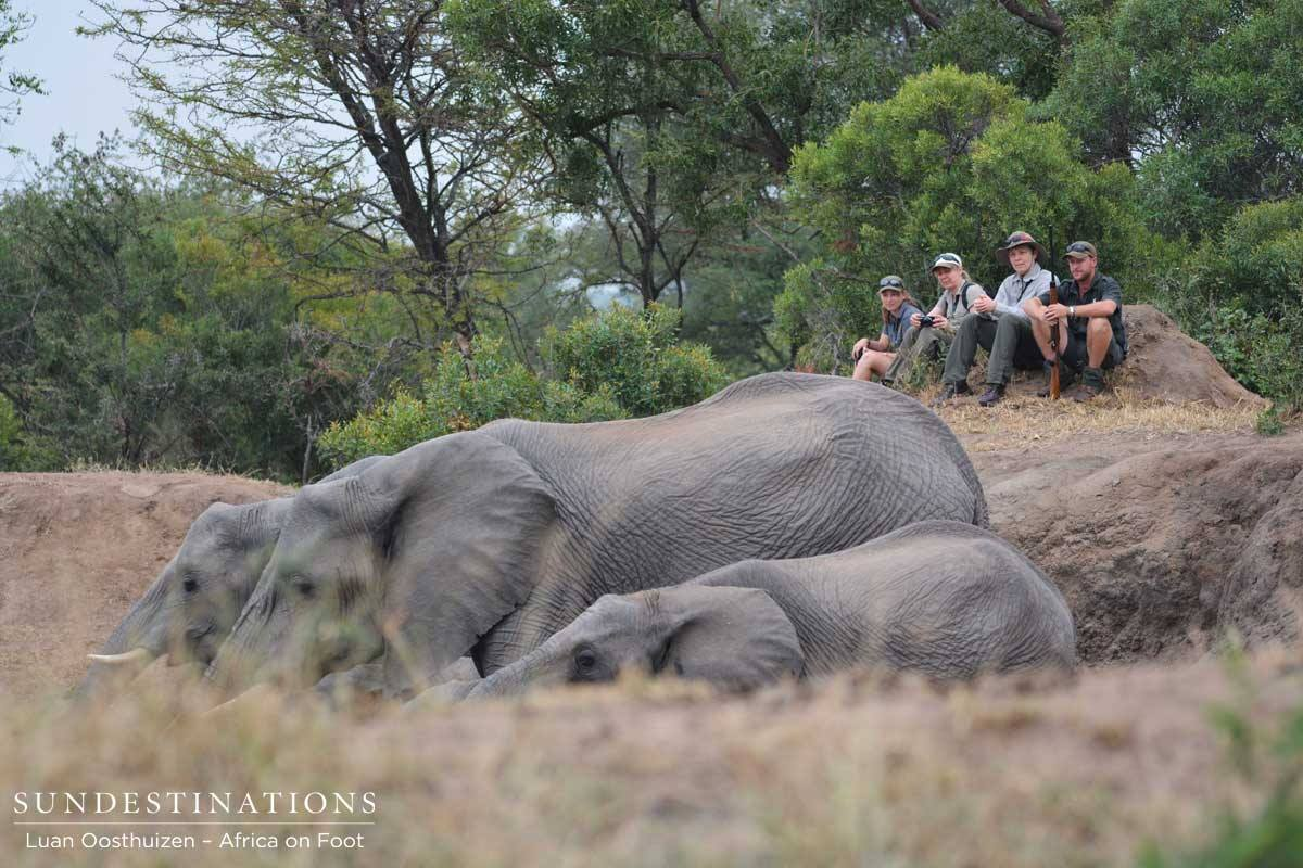 Close encounter with elephants at Africa on Foot