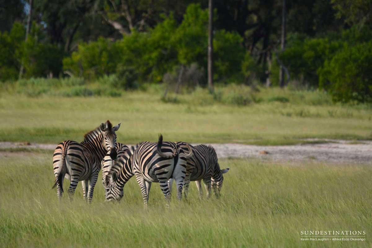 Walking Chief's Island with the Okavango locals