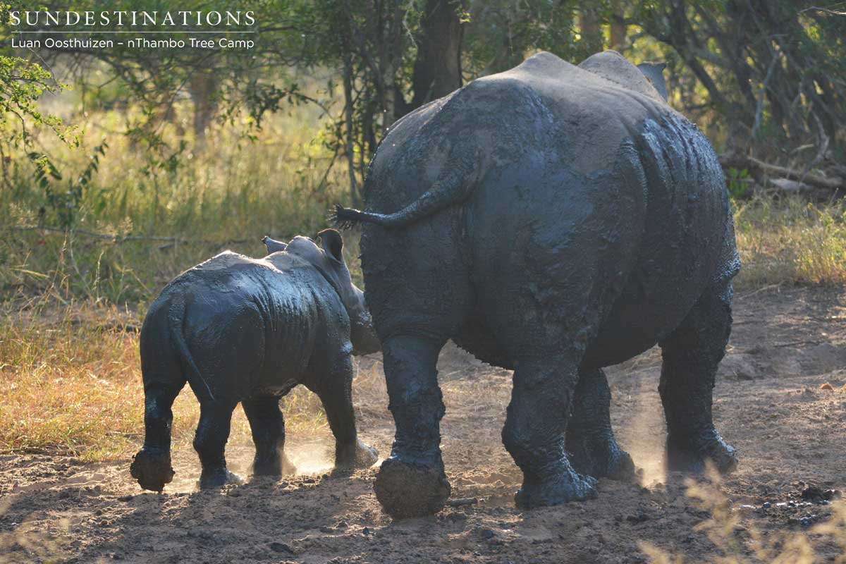 FROM THE FRONT LINE: Saving Our Rhino