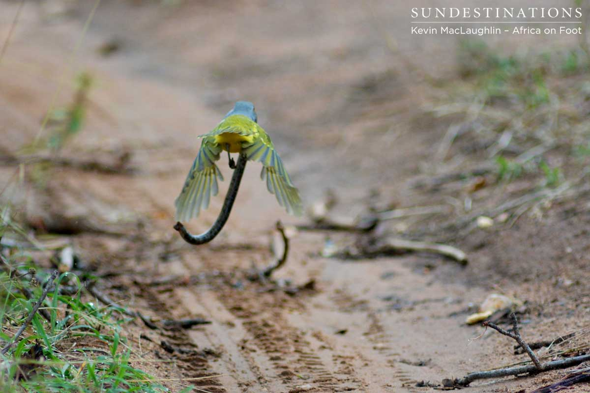 Killer Birds: The Unlikely Birds of Prey