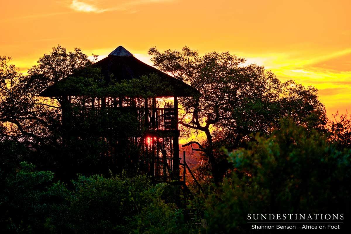 The Magic of a Safari Tree House