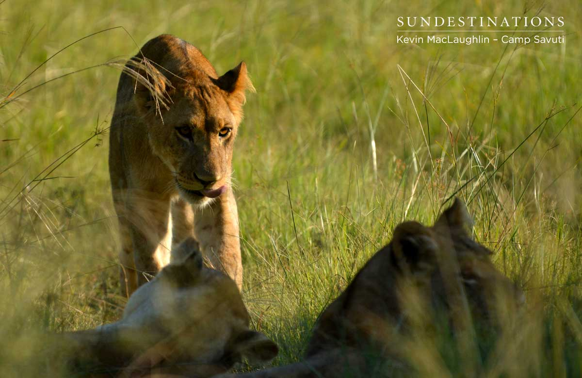 Cubs emerge from the shadows