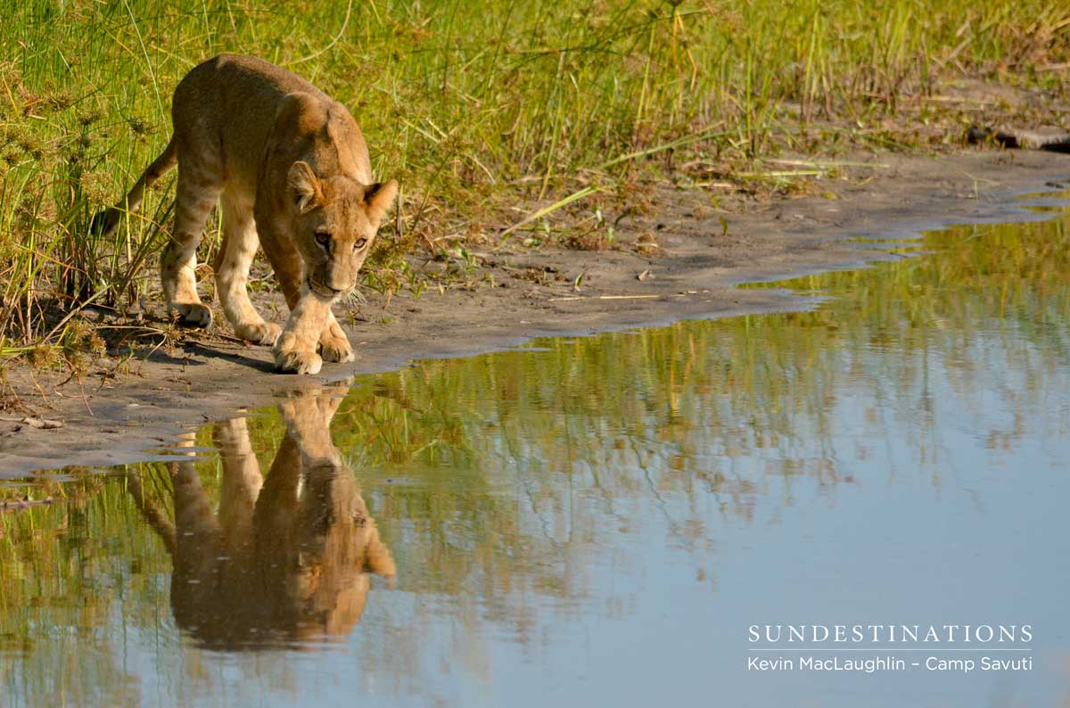 Inspecting the reflection