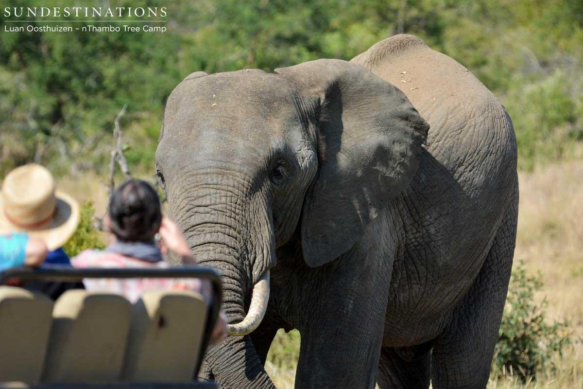 Elephant visitors at nThambo Tree Camp