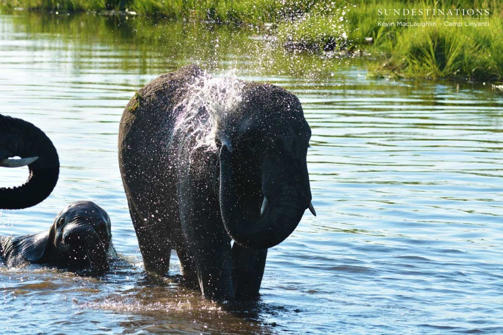 Elephants loving the water at Camp Linyanti