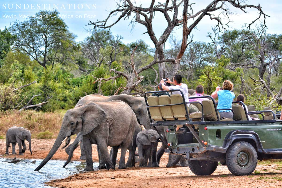 Top 5 Reasons to Stay at Africa on Foot