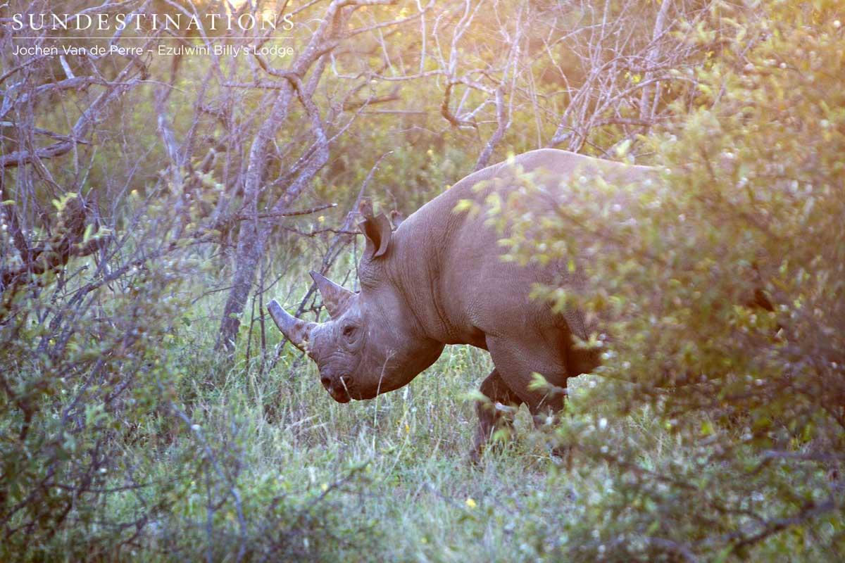 Safari Highlights: 3 Days at Ezulwini