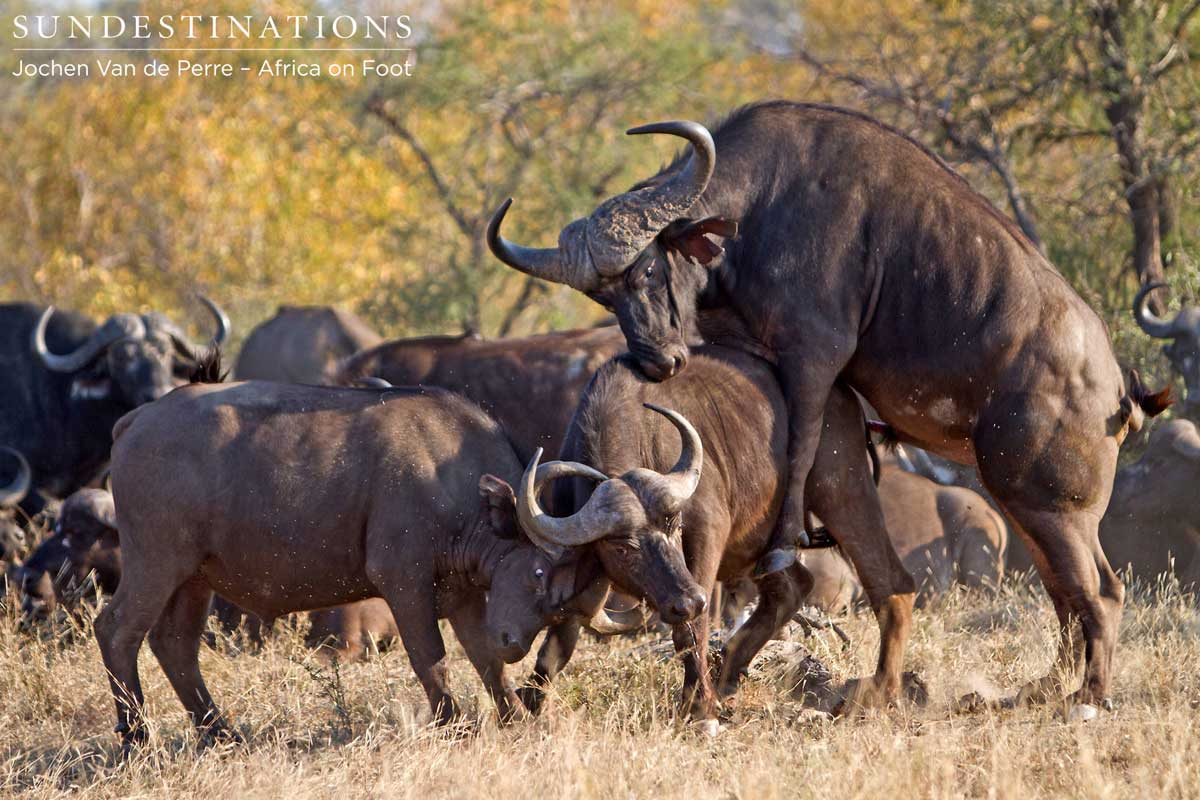 Week in Pictures: Our Incredible Kruger