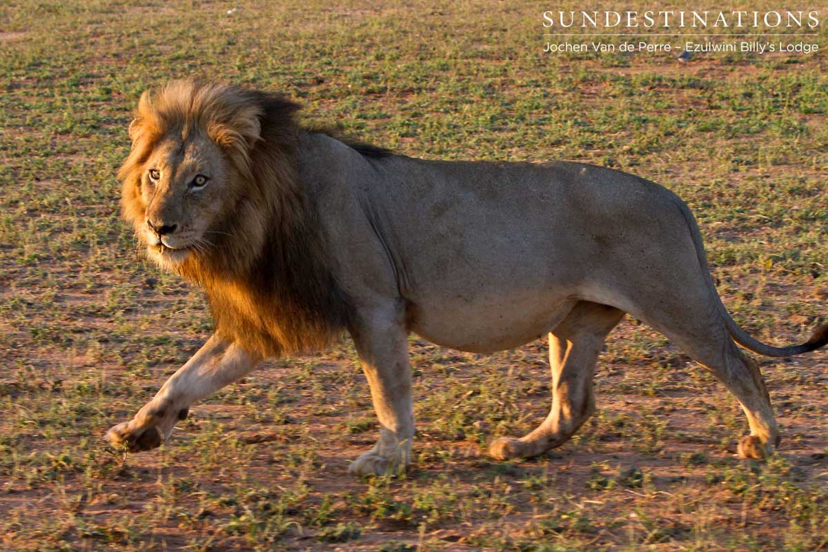 Meet the Olifants West Lions at Ezulwini