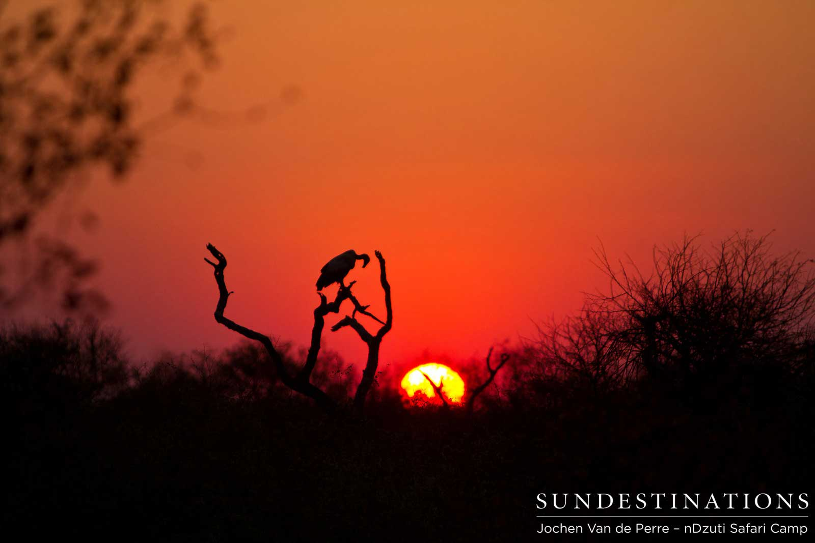 Week in Pictures: Kruger + Botswana Safari Splendour