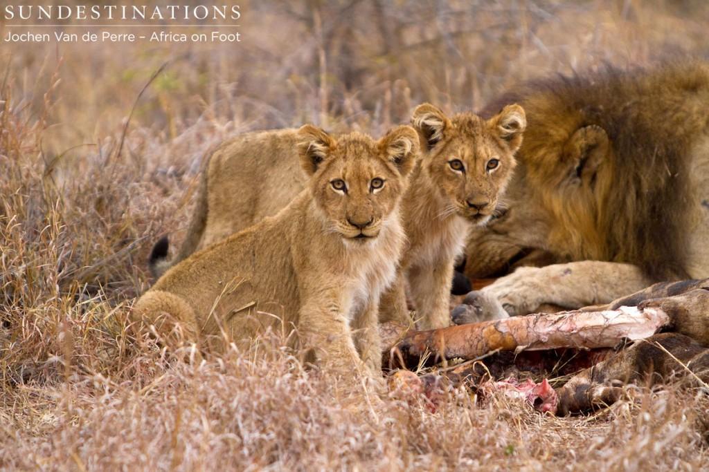 Hercules Cubs