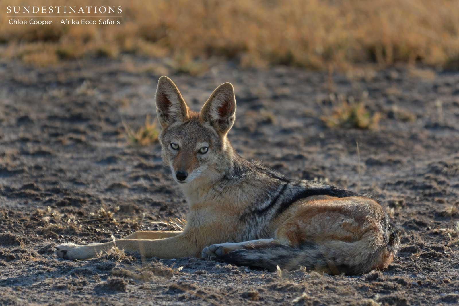 Valentine's Day : 4 Monogamous Animals Seen on Safari