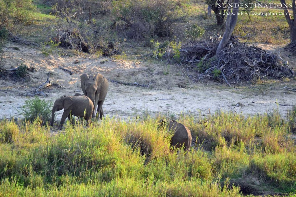 Elephants on the riverbank