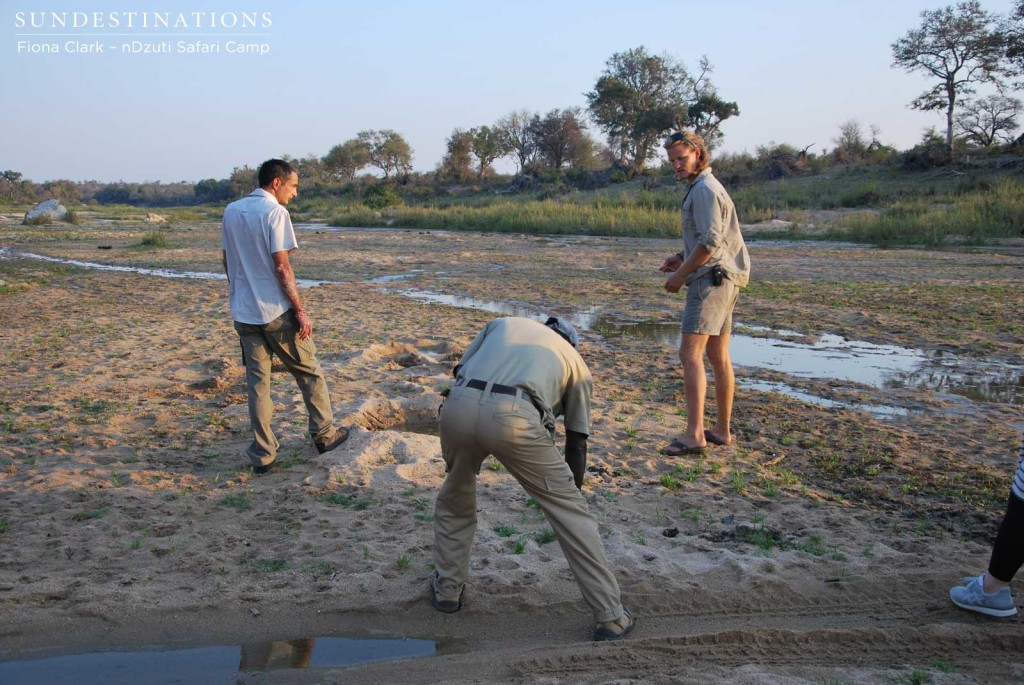 Tracking lions in the riverbed