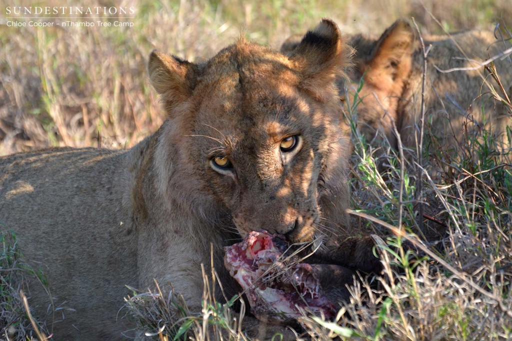 Ross Pride young male with his warthog kill