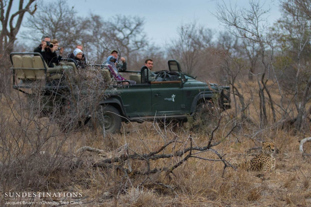 nThambo Tree Camp enjoys a sighting with a cheetah