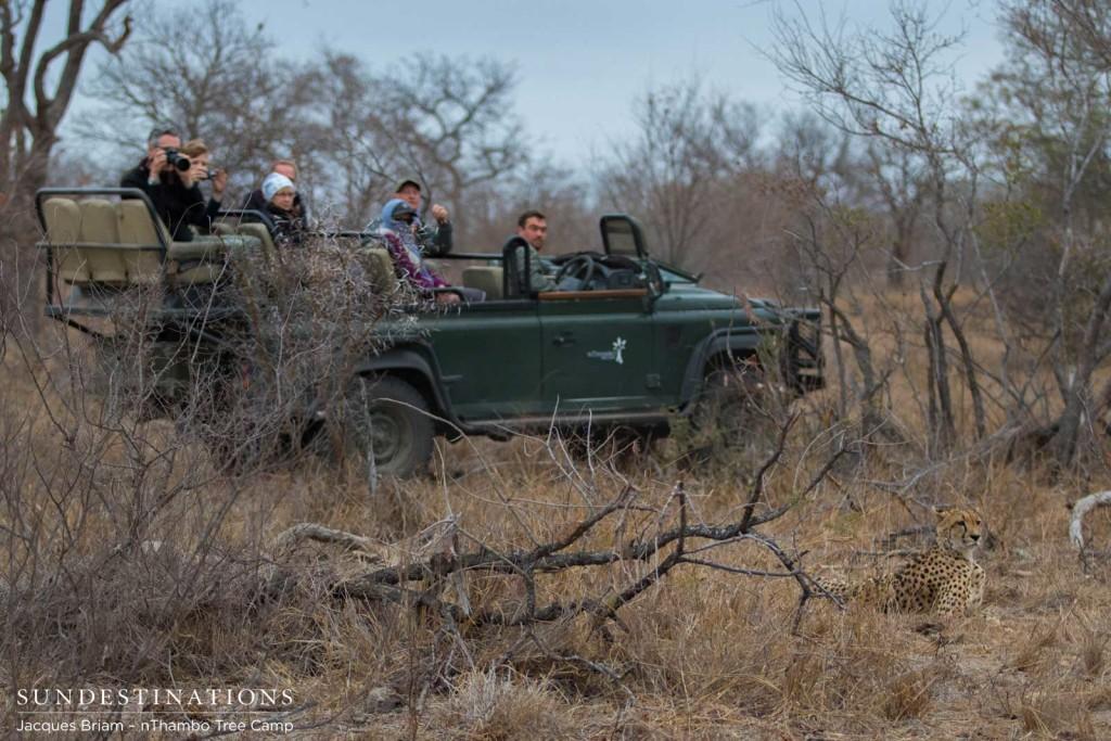 nThambo Tree Camp enjoys a sighting with a cheetah