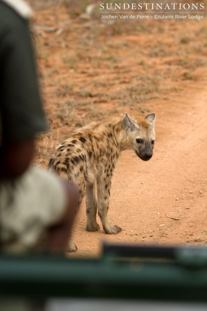 Following hyena pups in the game viewer