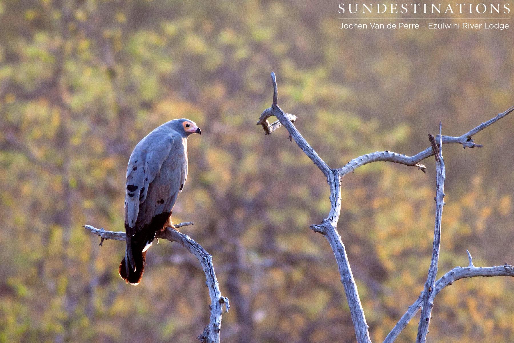 Birds of the Balule