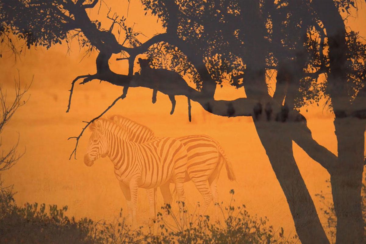 Afrika Ecco Safaris