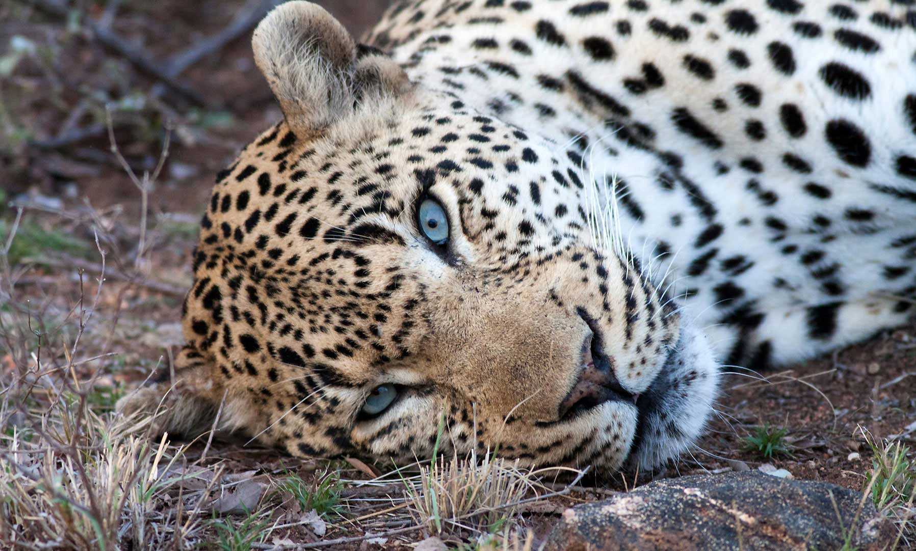Game Drives at Ezulwini Game Lodges: Observing the Wild