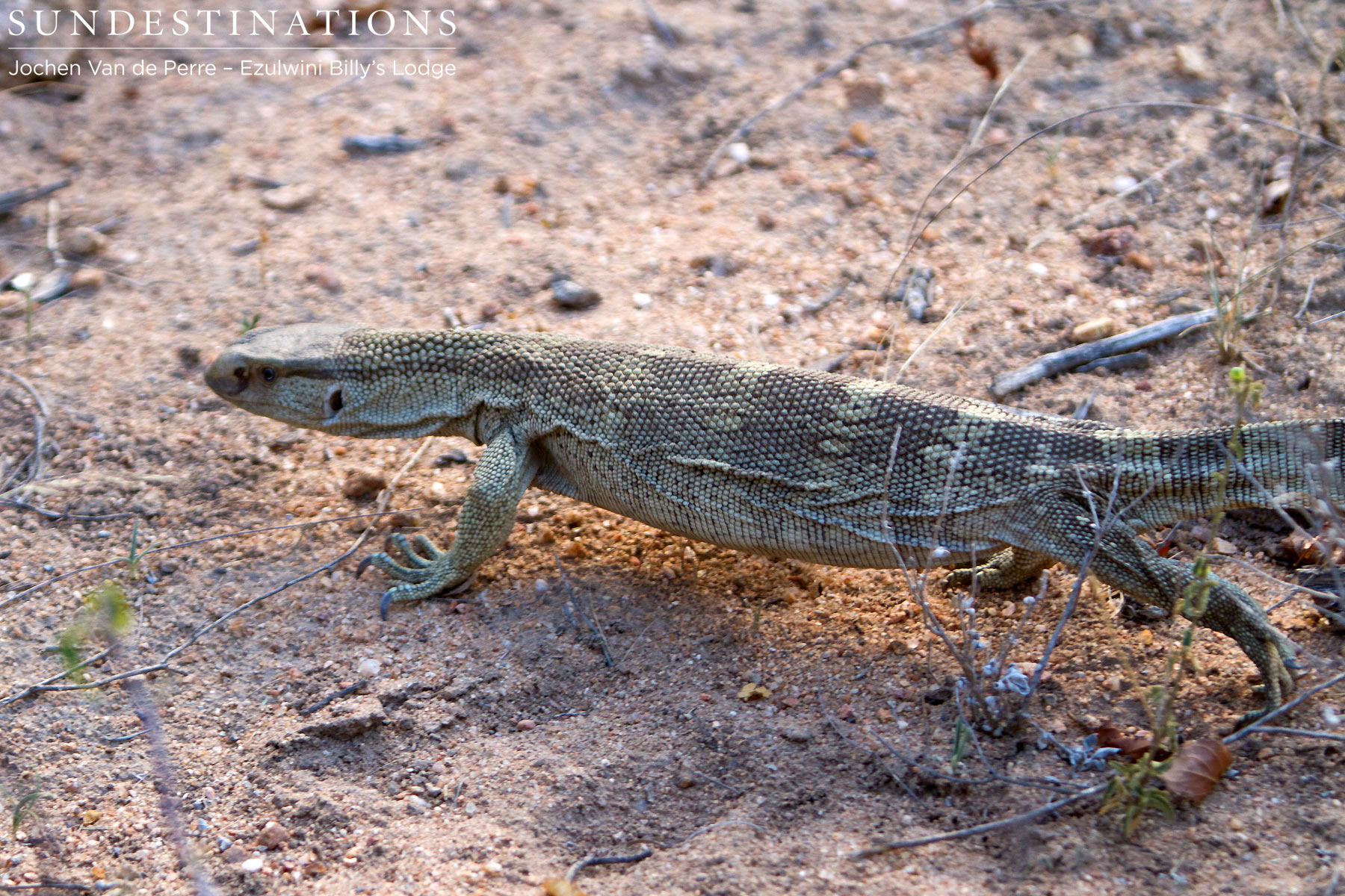 Slippery, Slithery, and Scaly: Reptiles of Balule