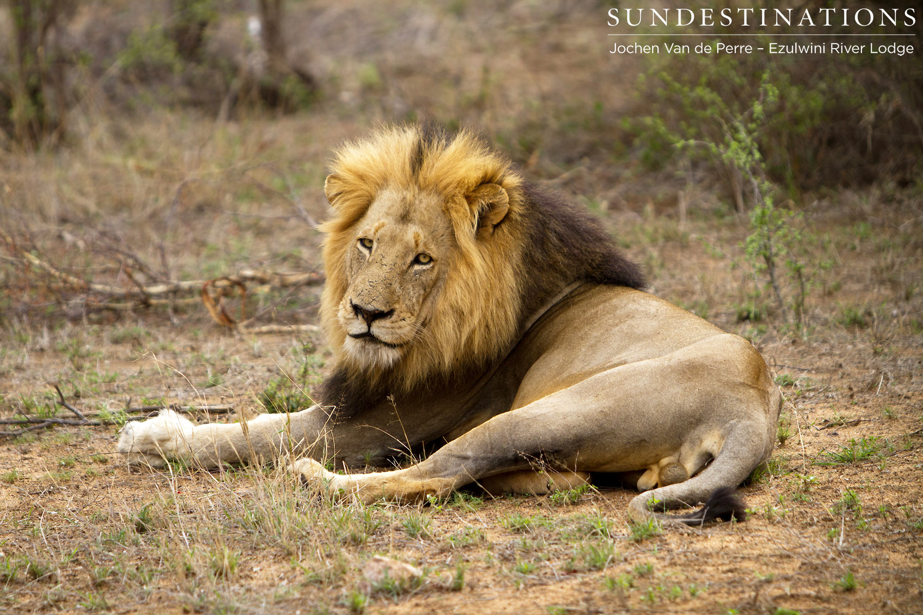 Dominant male of the York Pride