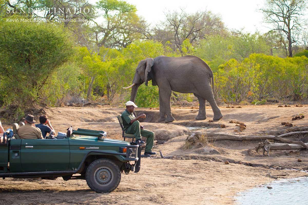 Elephant Bull at nThambo