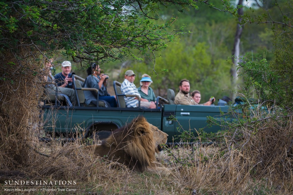 nThambo Tree Camp guests get a close look at a Trilogy male