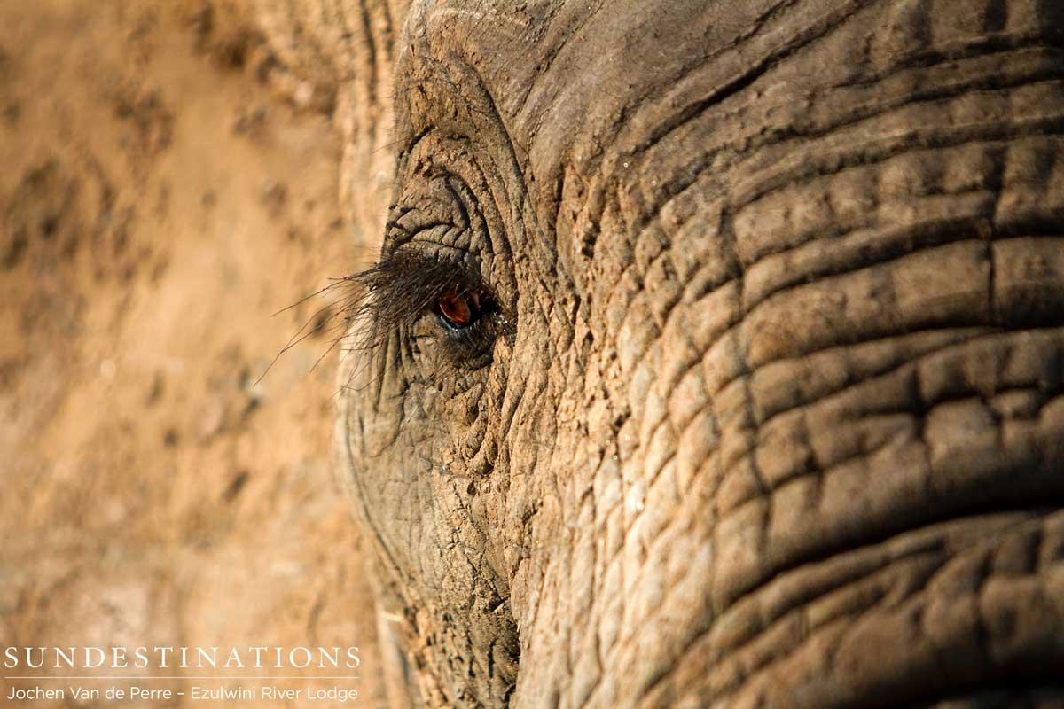Week in Pics: It's a Wildlife Wrap ! Goodbye 2015.