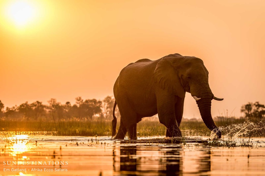 Sunset with the elephants in a mokoro