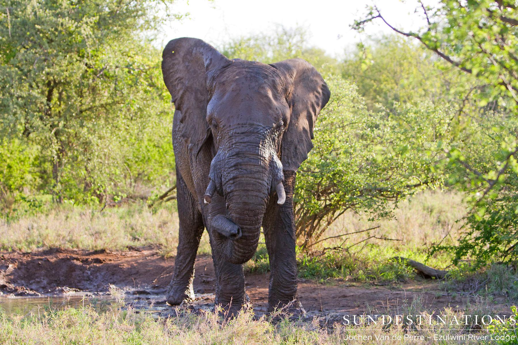 4 Of the Big 5 on Safari with Ezulwini