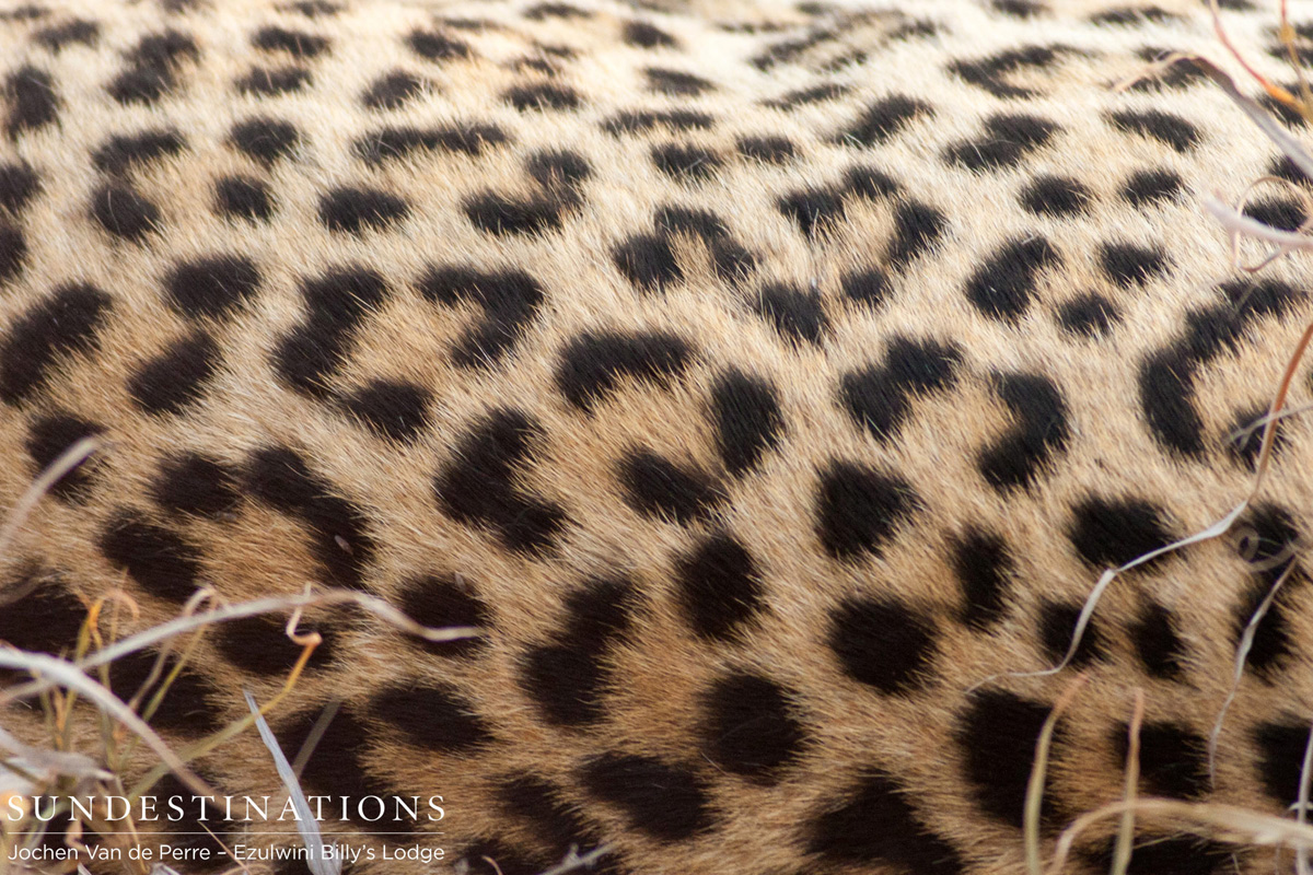Week in Pics: A Kruger Kaleidoscope of Colours