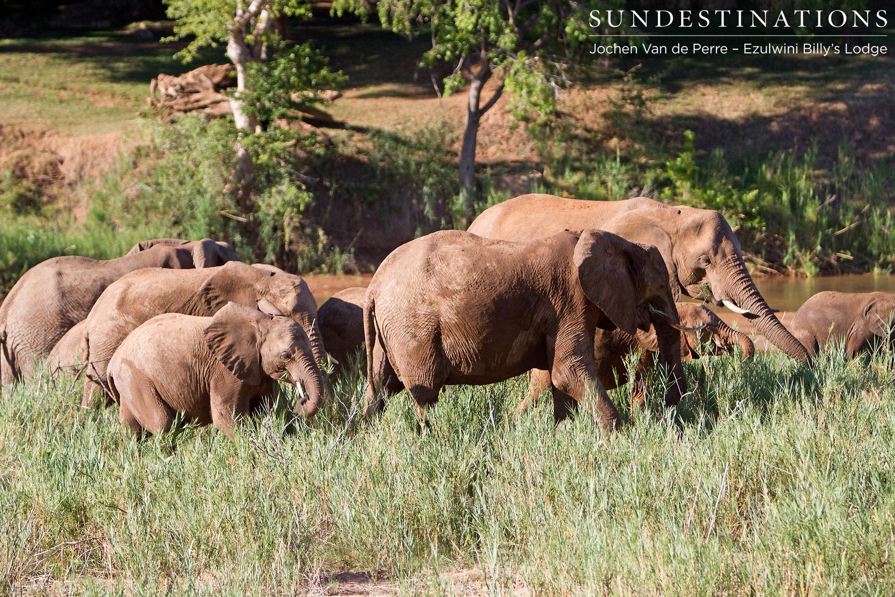 Elephants on the 'Elephants River'