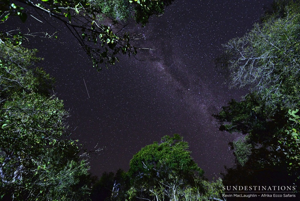 The stellar night skies in the Okavango Delta