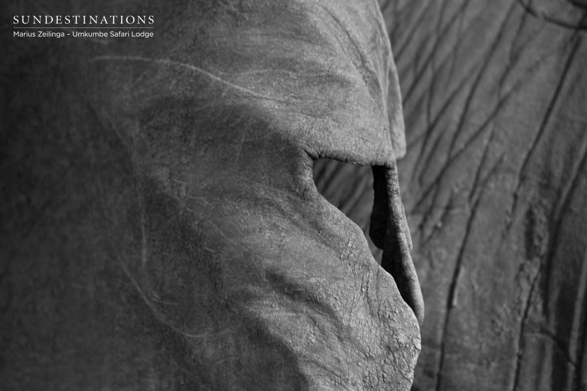 Marius Gets Crazy with Photos of Elephant Anatomy