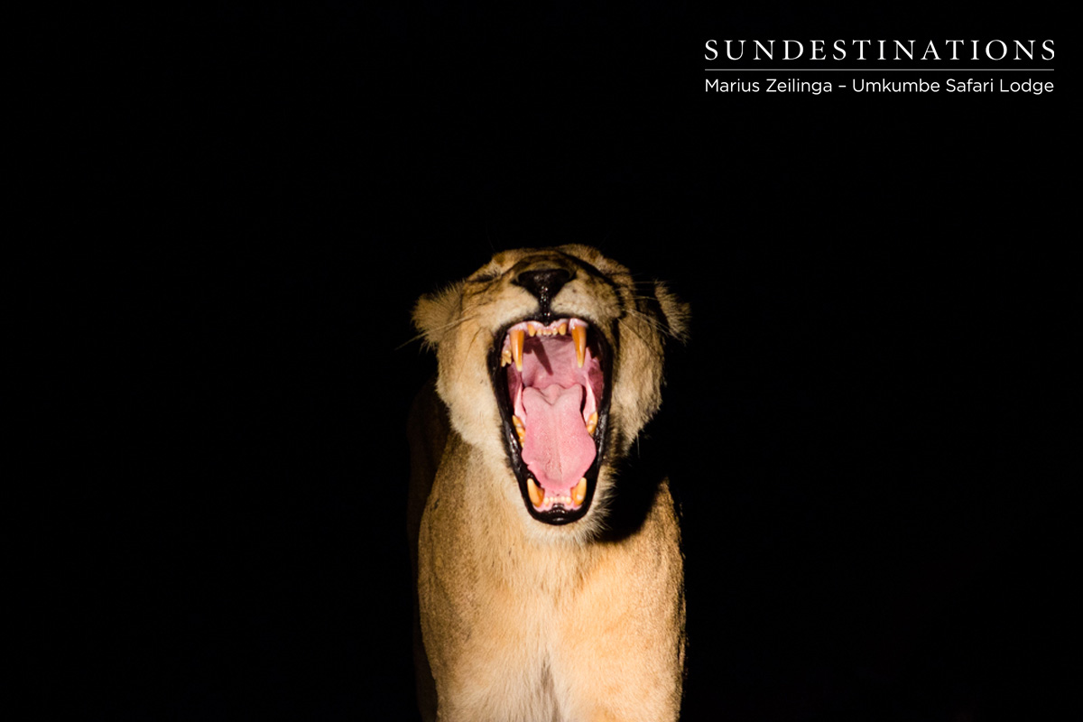 Week in Pics : Feisty & Wide-mouthed Wildlife !
