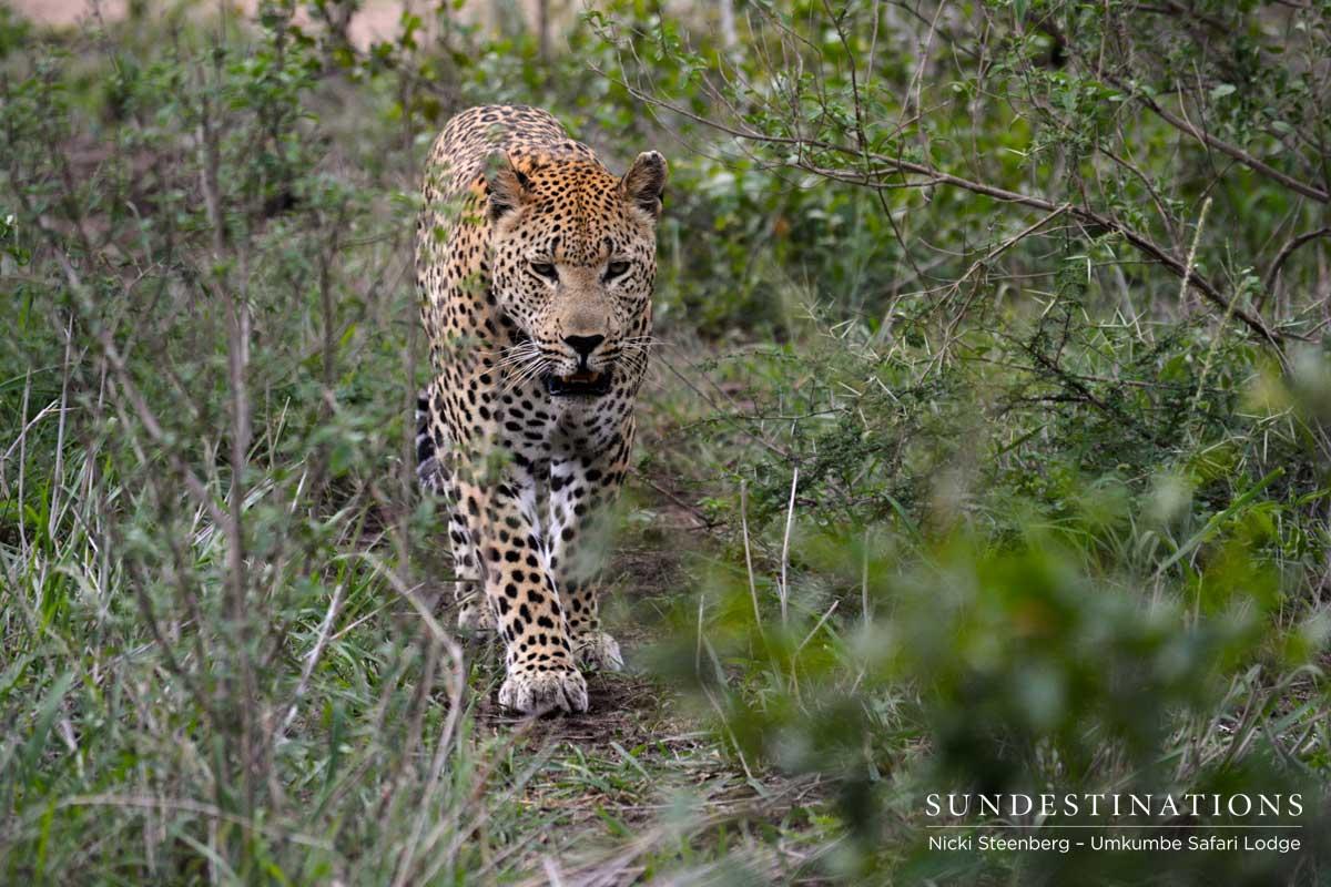 Mxabene Takes a Stroll