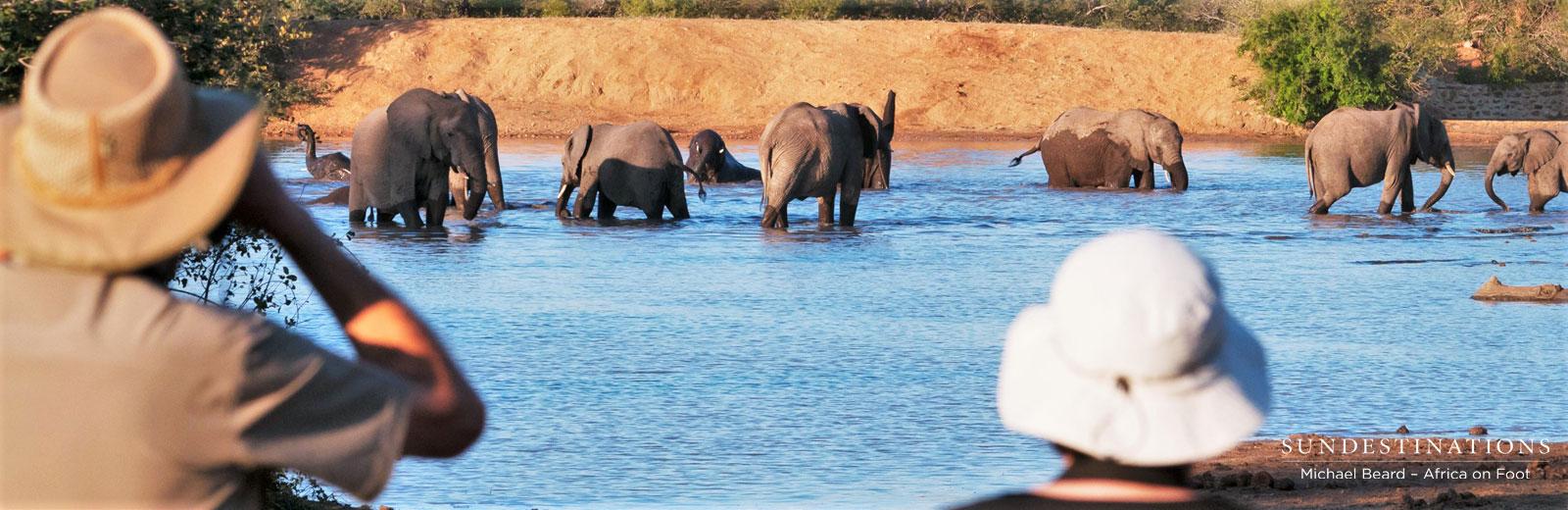 Elephants at Dam