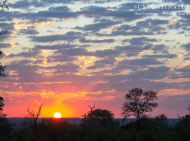 It doesn't matter what time of day it is in southern Africa, one thing's for certain – above your head lies a blanket of huesand striking rays of colour. Renown for its sunsets, crisp blue skies and crystal clear night skies; Africa has more to offer than just exceptional game viewing! While we bring you […]