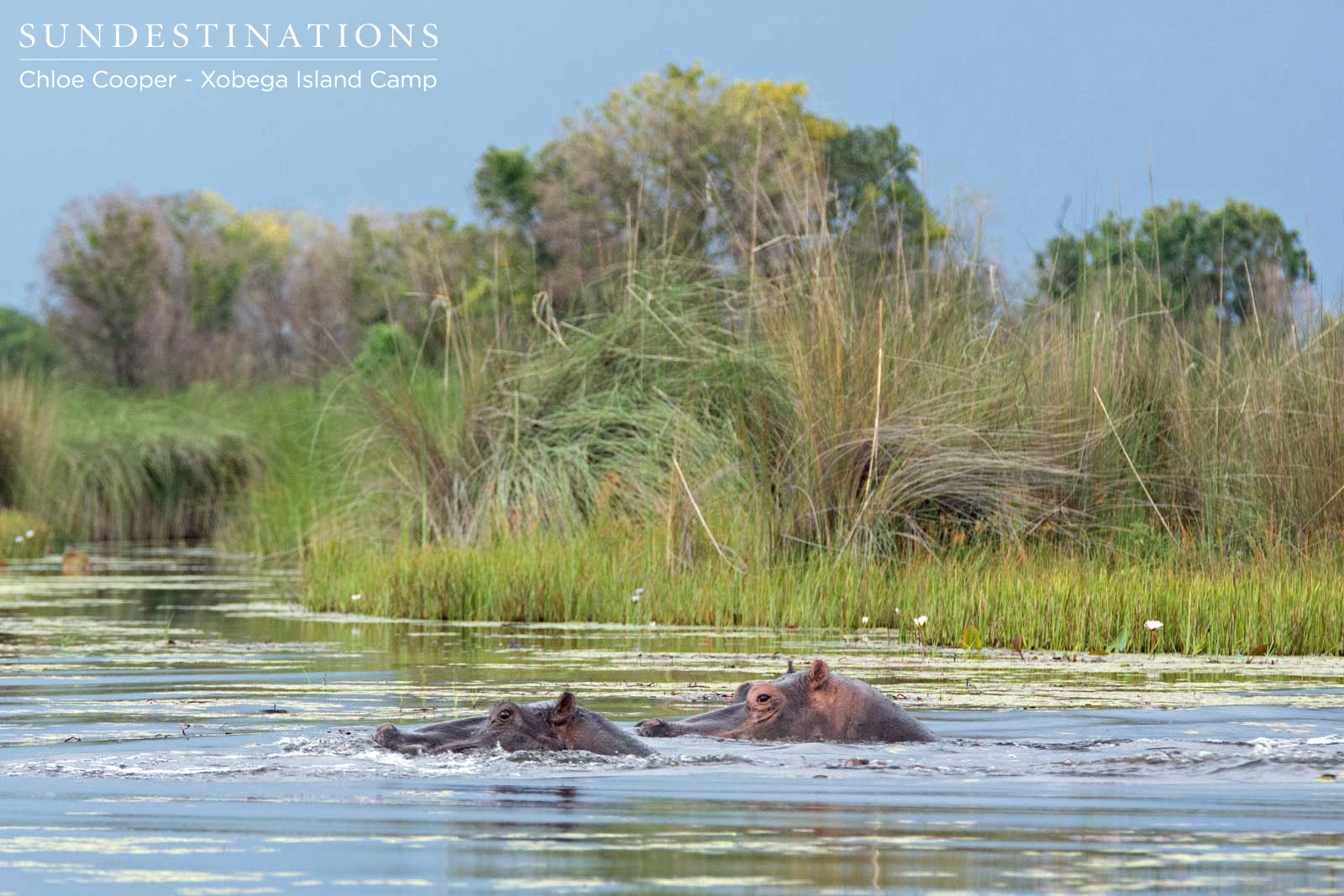 Watching Clumsy Hippos Mate While on a Xobega Boat Cruise