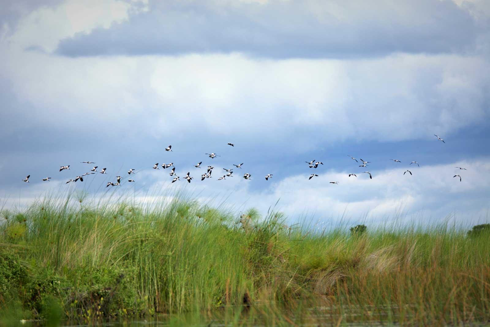 Delta Birding Safari at Xobega Island Camp