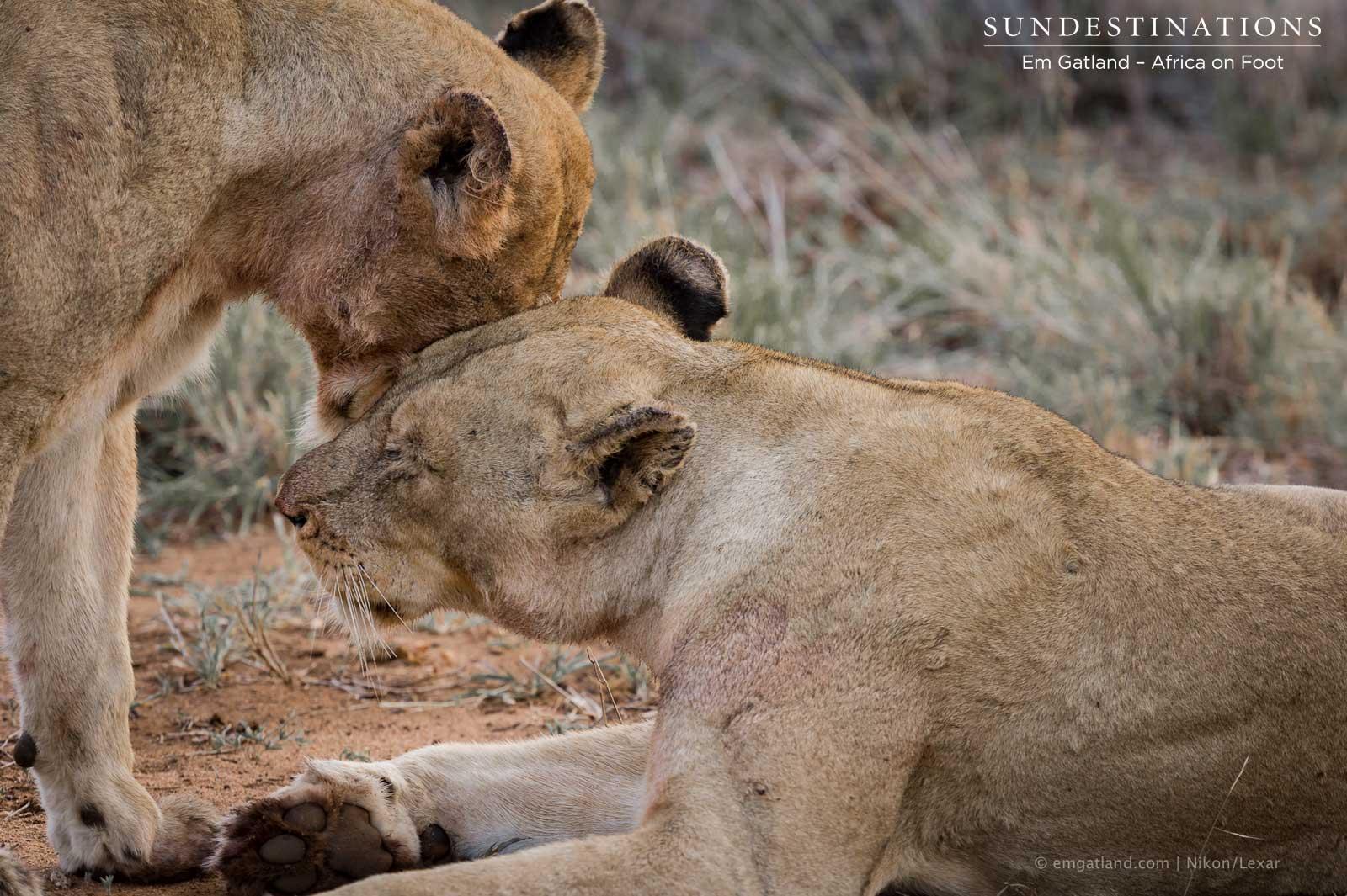 Ross Breakaway Lionesses: #BestFriendsForever