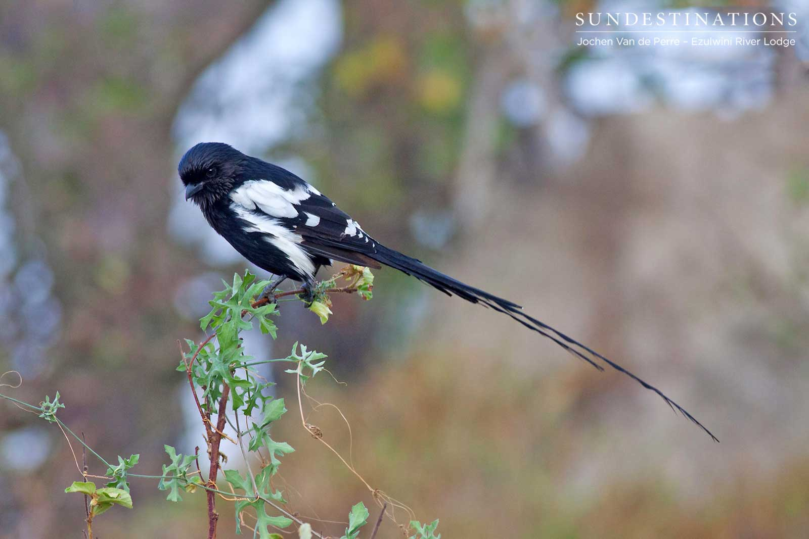 Week in Pictures: Winter Wildlife